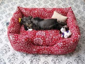 Купить корм для кошек Royal Canin | Паучи Роял Канин